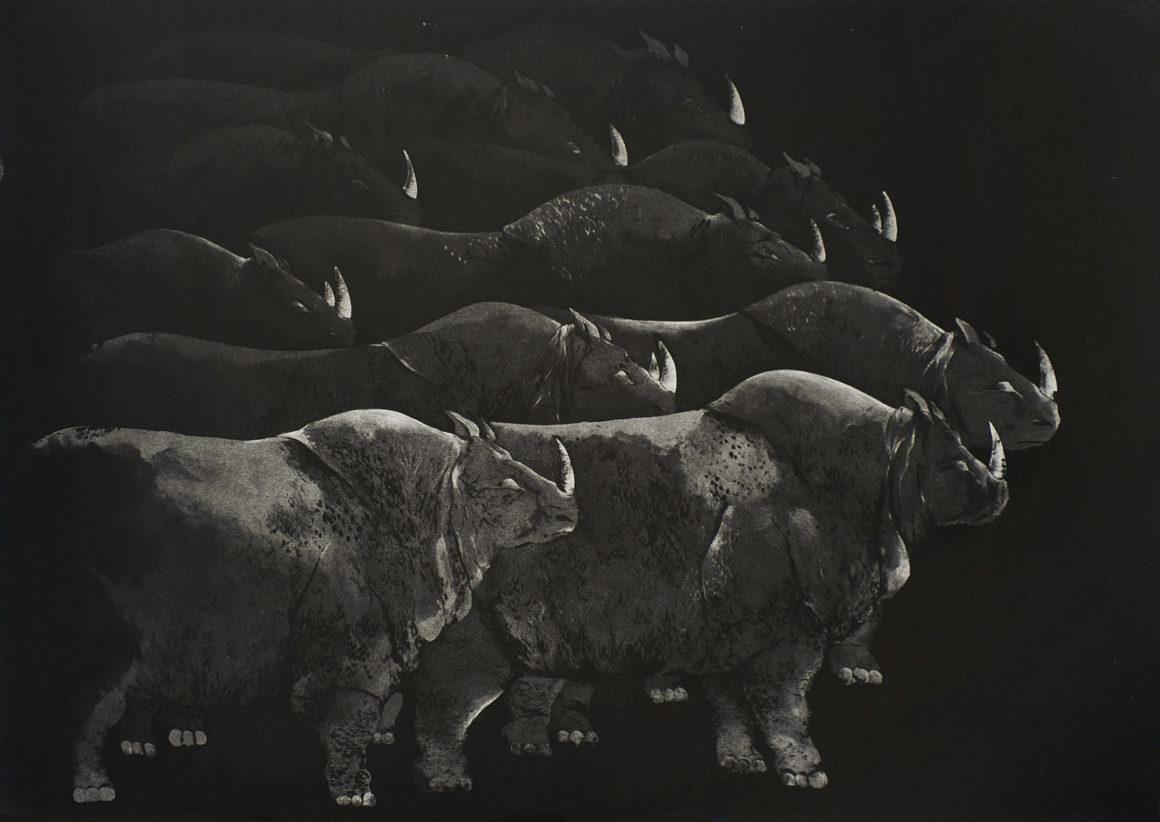 """Marjan SEYEDIN - série """"Troupeaux"""" - rhinocéros, 2012 - Aquatinte et pointe sèche, tirage à 21 épreuves hors marges - 50 x 70 cm"""