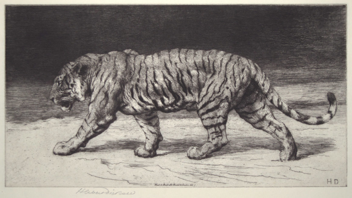[A Bengal tiger] by Herbert Dicksee Etching 1915