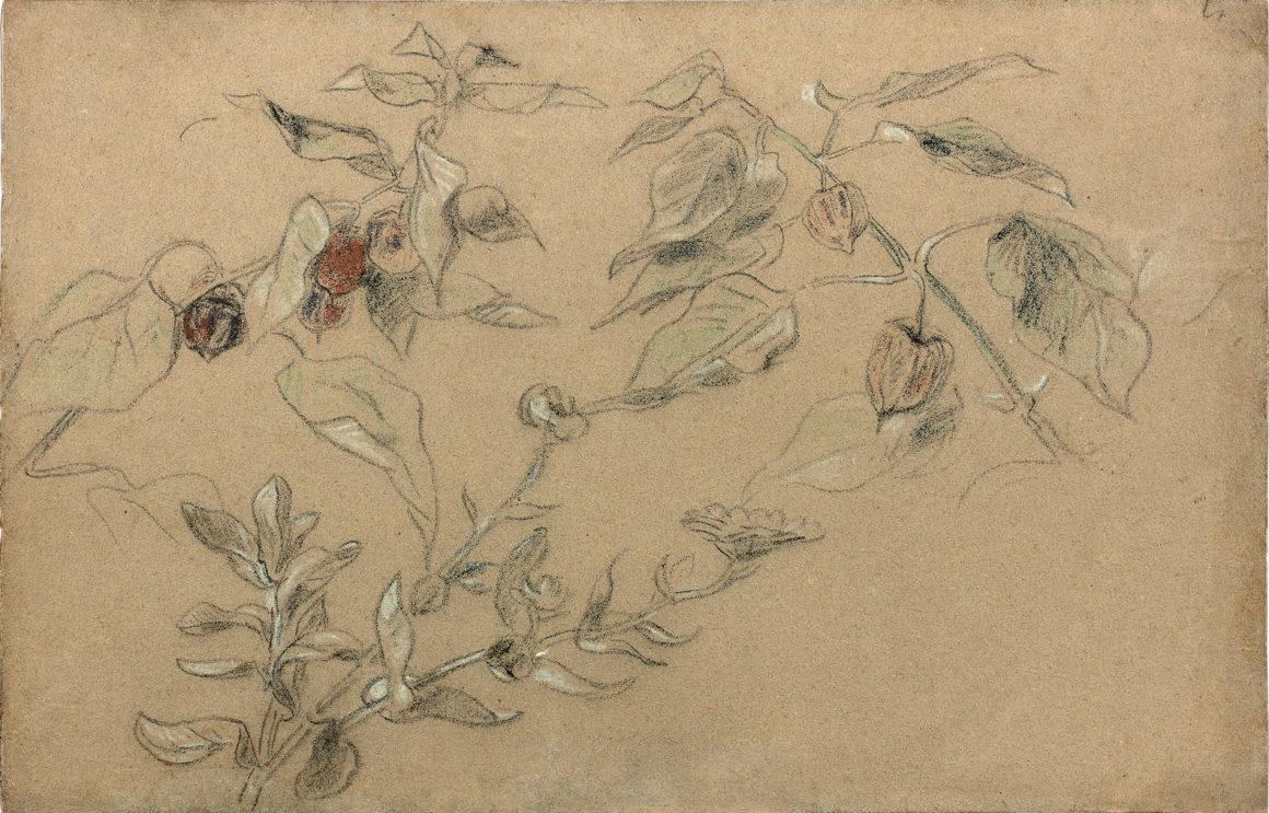 Eugène Delacroix Branches de physalis et de marguerite Pastel 262 x 402 mm
