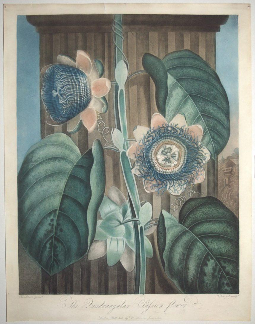 Catalogue n°105, Grosvenor Prints